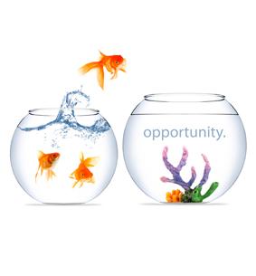 oportunite